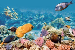 Comp. Aquarium 2 20x60 (Set x2)