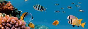 Tucan-Decor-Aquarium-1-20x60