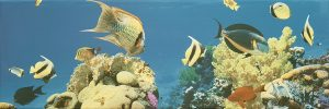 Tucan-Decor-Aquarium-3-20x60